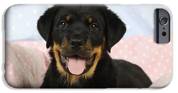 Dog Close-up iPhone Cases - Rottweiler Puppy Dog iPhone Case by John Daniels