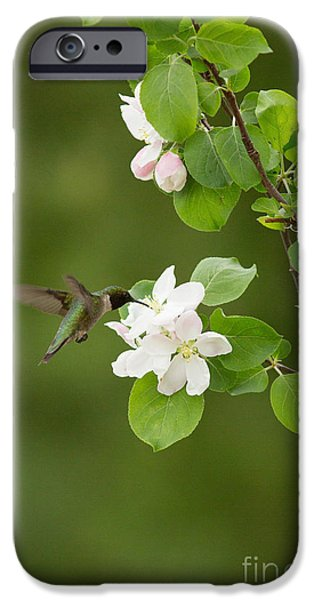 Archilochus Colubris iPhone Cases - Ruby-throated Hummingbird iPhone Case by Linda Freshwaters Arndt
