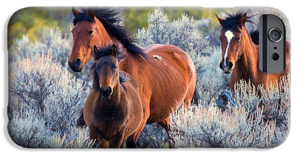 Wild Horse iPhone Cases - Running Free iPhone Case by Mike Dawson