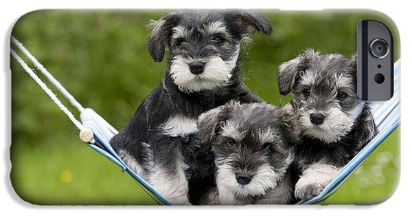 Cute Schnauzer iPhone Cases - Schnauzer Puppy Dogs iPhone Case by John Daniels