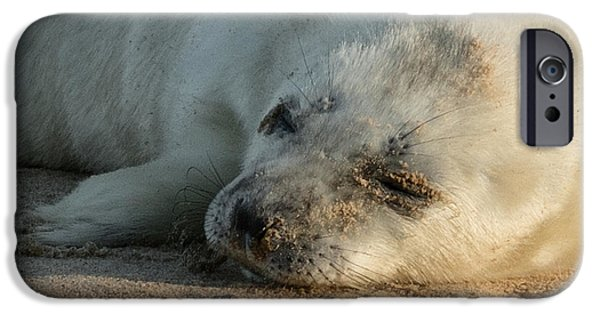 Grey Photographs iPhone Cases - Seal Pup iPhone Case by Ian Hufton