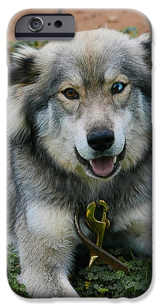 Husky Mixed Media iPhone Cases - Siberian Husky iPhone Case by Michael Braham
