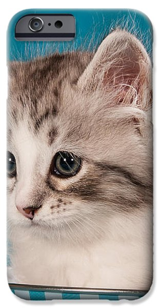 sibirian cat kitten iPhone Case by Doreen Zorn