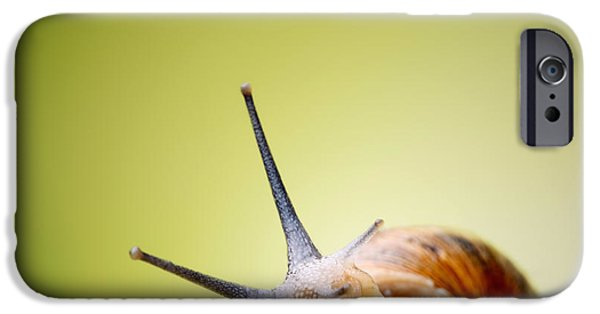 Macro iPhone Cases - Snail on green stem iPhone Case by Johan Swanepoel