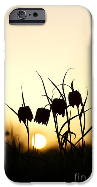 Meleagris iPhone Cases - Snakes head fritillary flowers at sunset iPhone Case by Tim Gainey