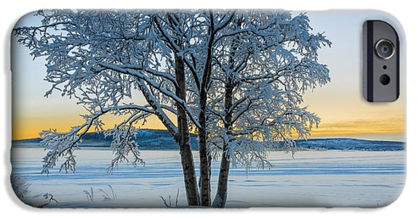 Wintertime iPhone Cases - Snow Covered Trees In Extreme Cold iPhone Case by Panoramic Images
