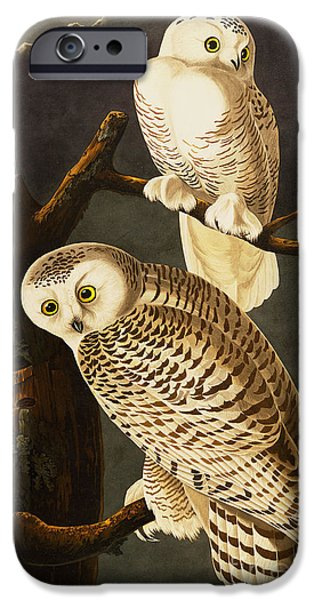 Snowy Drawings iPhone Cases - Snowy Owl iPhone Case by Celestial Images