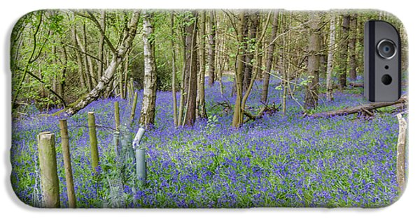 Morning iPhone Cases - Spring in the Woods iPhone Case by Trevor Kersley