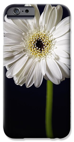 Healing Posters iPhone Cases - Standing Tall iPhone Case by Kim Andelkovic