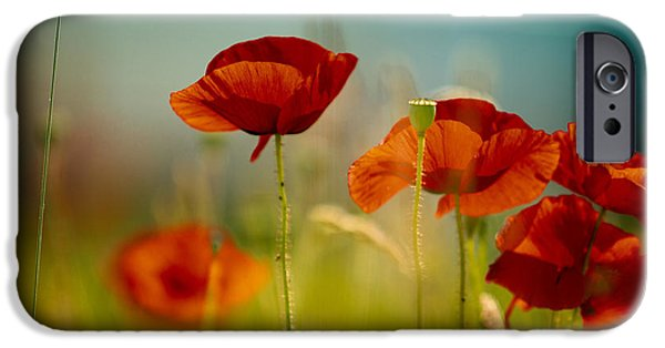 Meadow Photographs iPhone Cases - Summer Poppy iPhone Case by Nailia Schwarz