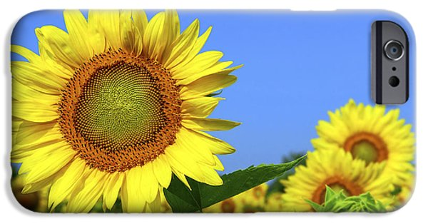 Grow iPhone Cases - Sunflower field iPhone Case by Elena Elisseeva