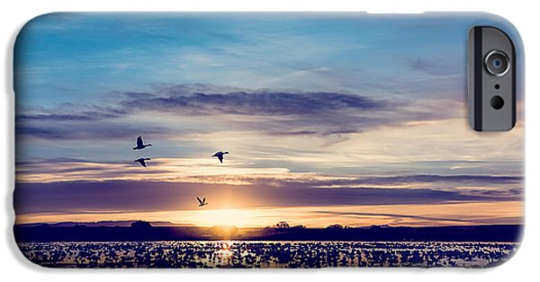 Sunset Seascape iPhone Cases - Sunrise - Snow Geese - Birds iPhone Case by Sharon Norman