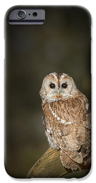 Animal Wisdom iPhone Cases - Tawny Owl iPhone Case by Andy Astbury