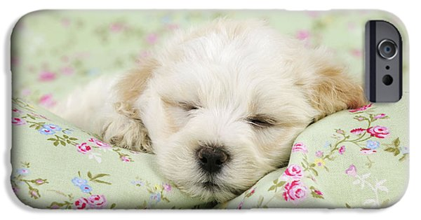 Dog Close-up iPhone Cases - Teddy Bear Puppy Dog iPhone Case by John Daniels