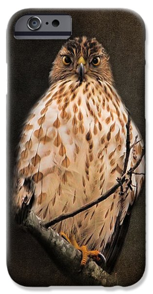 Hawk Art iPhone Cases - The Observer iPhone Case by Jai Johnson