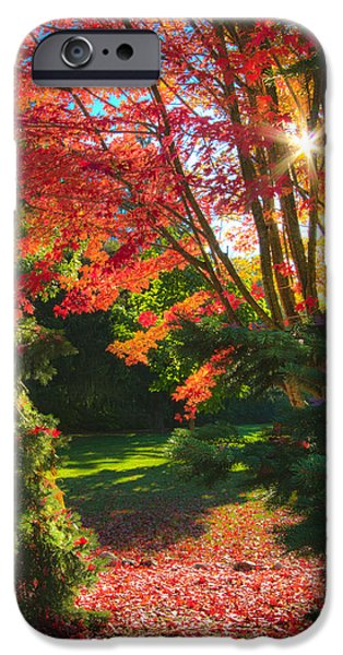 Meadow iPhone Cases - The Path iPhone Case by Phil Koch