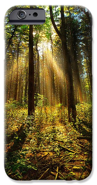 Pines Photographs iPhone Cases - The Pines iPhone Case by Phil Koch
