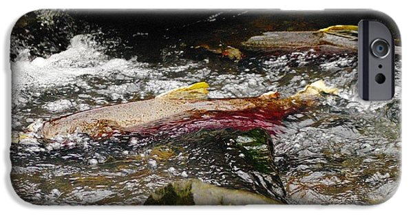 Fresh Water Fish iPhone Cases - The Struggle iPhone Case by Jeff  Swan