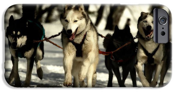 Husky iPhone Cases - The Team iPhone Case by Mountain Dreams