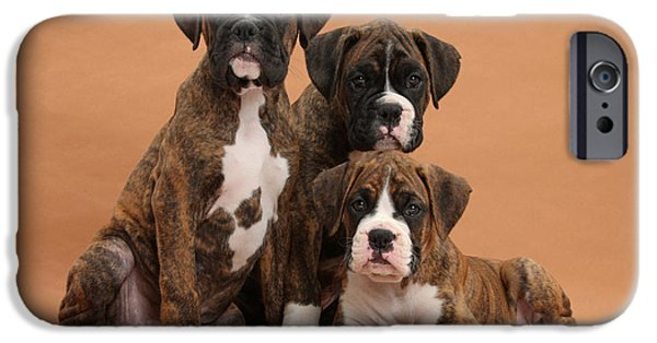 Boxer Puppy iPhone Cases - Three Boxer Puppies iPhone Case by Mark Taylor