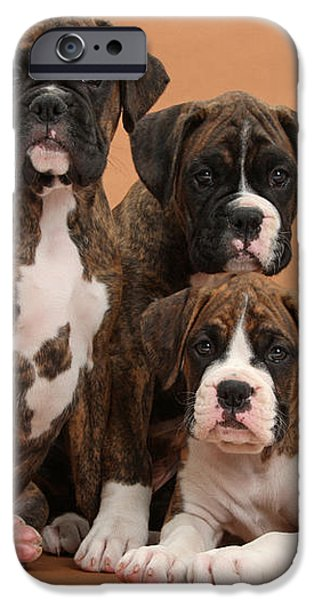 Three Boxer Puppies iPhone Case by Mark Taylor
