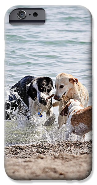 Friendly iPhone Cases - Three dogs playing on beach iPhone Case by Elena Elisseeva