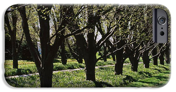 Botanical Photographs iPhone Cases - Trees Along A Walkway In A Botanical iPhone Case by Panoramic Images