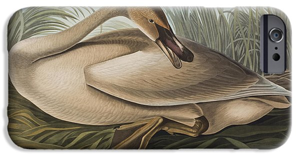 Swan iPhone Cases - Trumpeter Swan iPhone Case by John James Audubon