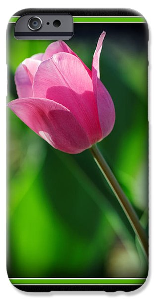 Matting iPhone Cases - Tulip CloseUp iPhone Case by Charles Feagans