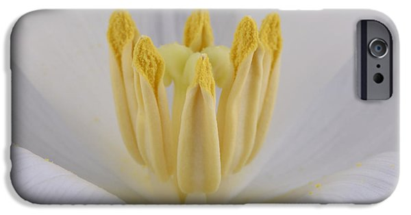 Beauty Mark iPhone Cases - Tulip iPhone Case by Mark Johnson