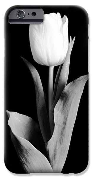 Delicate iPhone Cases - Tulip iPhone Case by Sebastian Musial