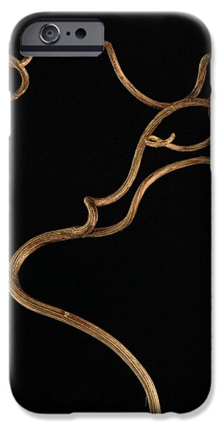 Twisty Nature iPhone Case by Claudio Bacinello