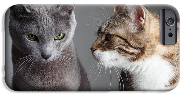 Housecat iPhone Cases - Two Cats iPhone Case by Nailia Schwarz