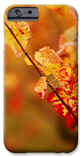 Close Focus Nature Scene iPhone Cases - Vineyard In Autumn, Gaillac, Tarn iPhone Case by Panoramic Images