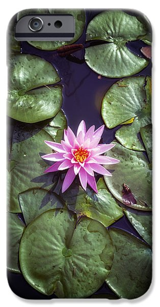 Floral Photographs iPhone Cases - Water Lily iPhone Case by Joana Kruse