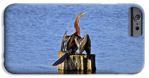 Anhinga iPhone Cases - Wet Wings iPhone Case by Al Powell Photography USA