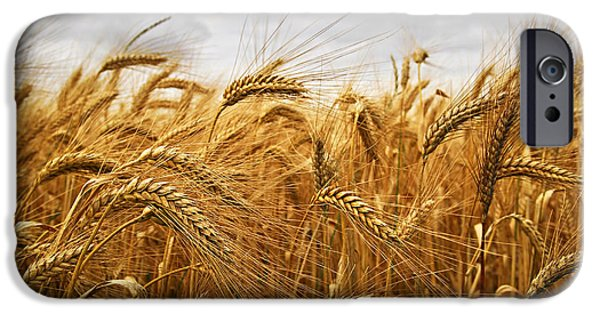 Fields iPhone Cases - Wheat iPhone Case by Elena Elisseeva