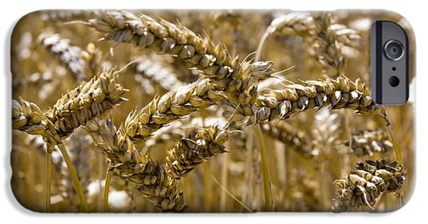 Agricultural iPhone Cases - Wheat Field In Summer iPhone Case by Mark Williamson