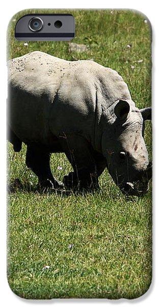 White Rhinoceros Calf  iPhone Case by Aidan Moran