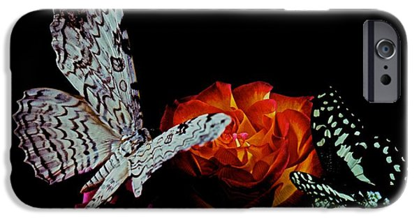 Etc. Photographs iPhone Cases - White Witch Moth and Citris Swallowtail Butterfly meet at midnight iPhone Case by Leslie Crotty