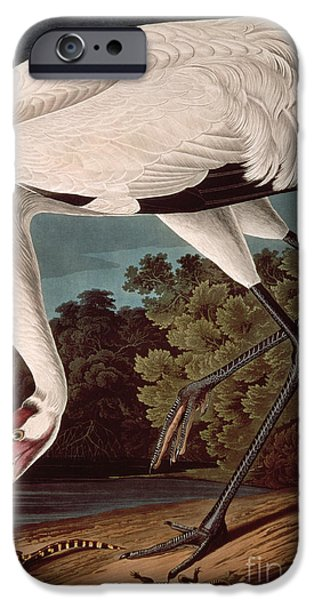 Ornithology iPhone Cases - Whooping Crane iPhone Case by John James Audubon