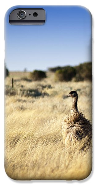 Wild Emu iPhone Case by Tim Hester
