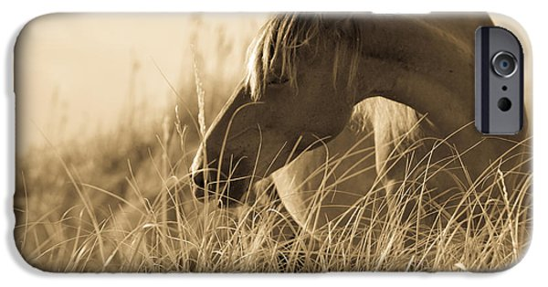 Wild Horse iPhone Cases - Wild Horse on the Beach iPhone Case by Diane Diederich