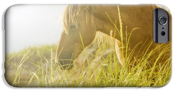 Morning iPhone Cases - Wild Horse on the Outer Banks iPhone Case by Diane Diederich