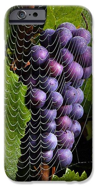 Jean Noren iPhone Cases - Wine in a web iPhone Case by Jean Noren