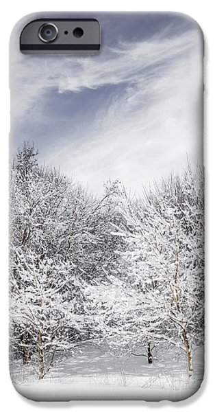 Park Scene iPhone Cases - Winter forest iPhone Case by Elena Elisseeva