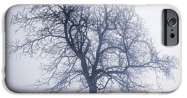 Park Scene iPhone Cases - Winter tree in fog iPhone Case by Elena Elisseeva