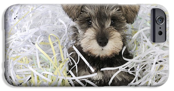 Dog Close-up iPhone Cases - Schnauzer Puppy Dog iPhone Case by John Daniels