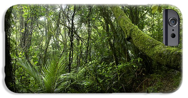 Environment Photographs iPhone Cases - Forest iPhone Case by Les Cunliffe