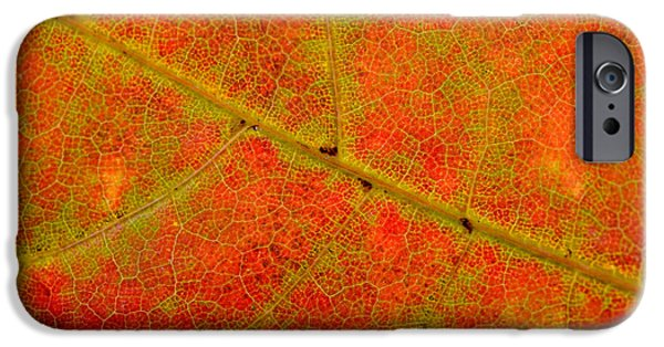 Nature Abstracts iPhone Cases - Autumn Maple Leaf Macro iPhone Case by Alain De Maximy